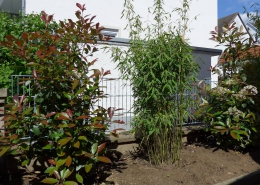 Heckenbezpflanzung