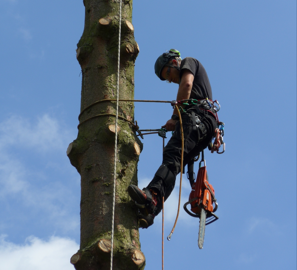 Baumfällung Baumpflege Seilklettertechnik